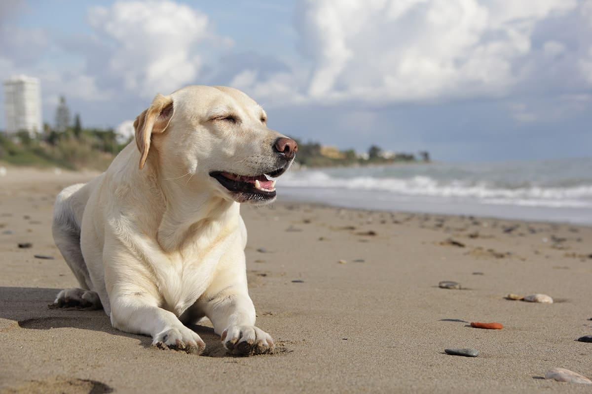 cagnolino_spiaggia